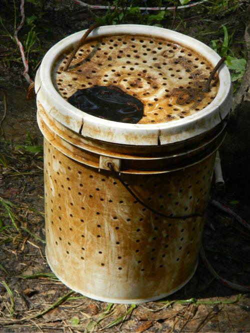 old bait bucket