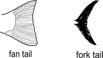 tail image
