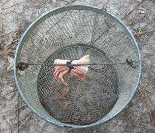 baited minnow trap